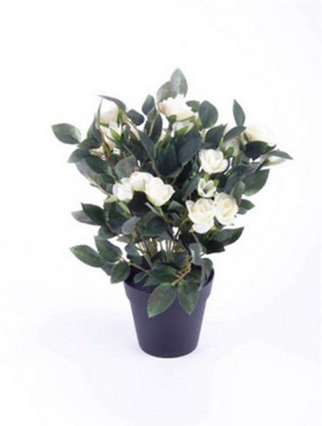Rose cremeweiß 30 cm | Kunstpflanze im Topf