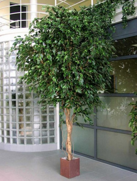 Giant Ficus exotoca 360 cm | Kunstbaum