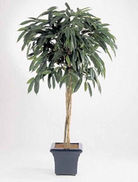 Ficus Longifolia 180 cm | Kunstbaum