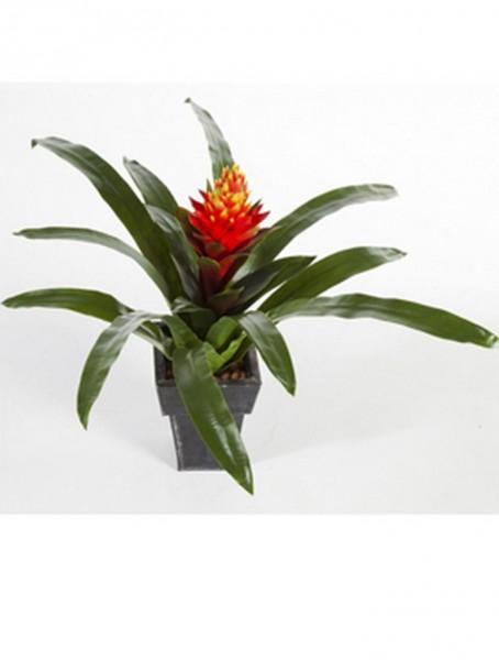 Guzmania conifera 50 cm | Kunstpflanze