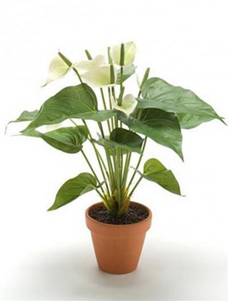 Anturium cremeweiß 40 cm | Kunstpflanze mit Topf