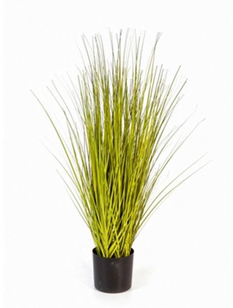 Miscanthus gold Gras  85cm Chinaschilf Kunstgras im Plastiktopf