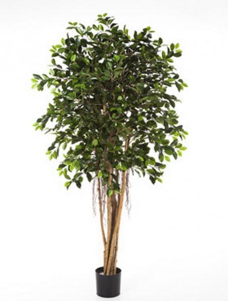 Ficus retusa | Kunstbaum