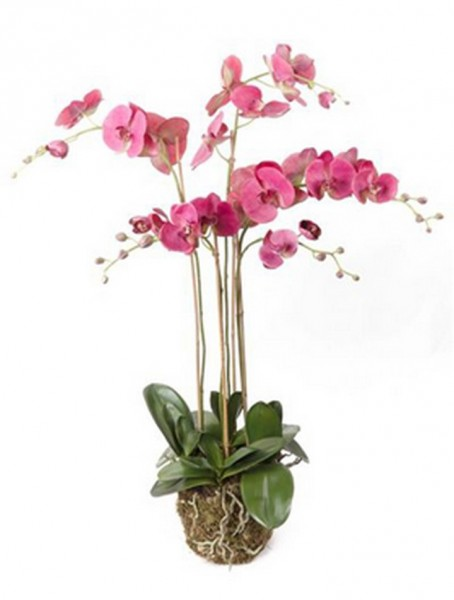 Phalaenopsis Giant Beauty 90 cm | Orchideen Kunstpflanze mit Moos