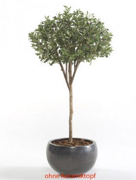 Olive Parasol 165 cm l künstlicher Olivenbaum im Kunststofftopf