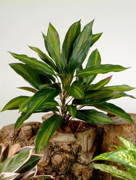 Dracaena Stiel 48 cm | Kunstpflanze ohne Topf