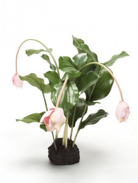Medinilla rosa | Kunstpflanze 45 cm