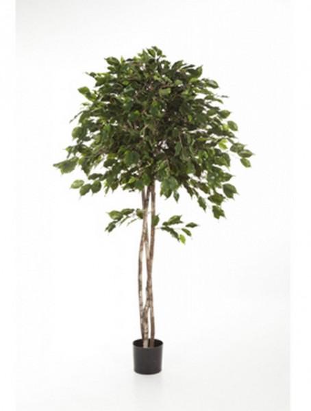 Ficus exotica umbrella | Kunstbaum